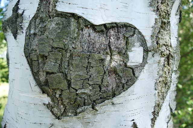 srdce v kůře